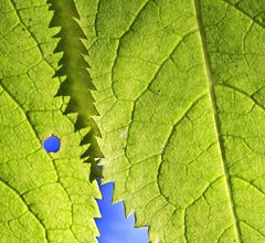 Minor Imperfections (Canadapt) Tags: shadow abstract square leaf hole zipper vein imperfection aspectratio canadapt jmpick