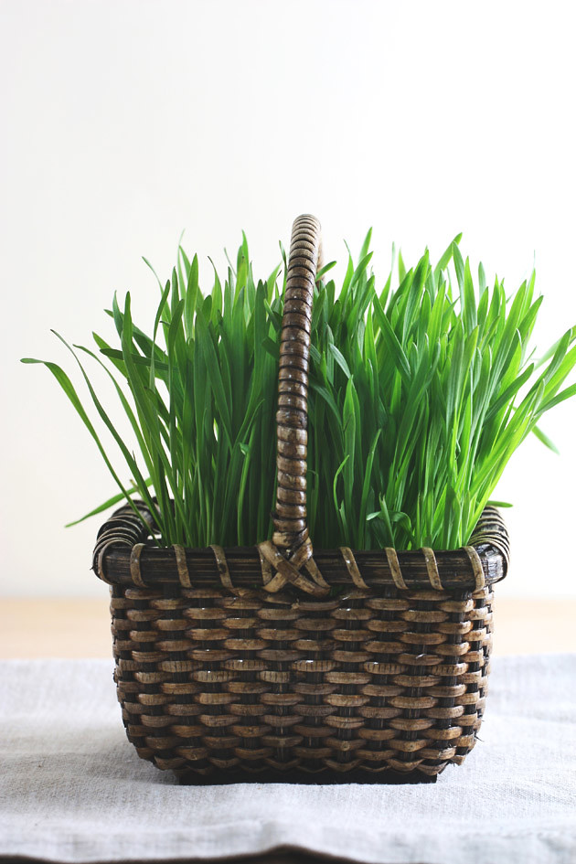 wheat-grass-baskets-2