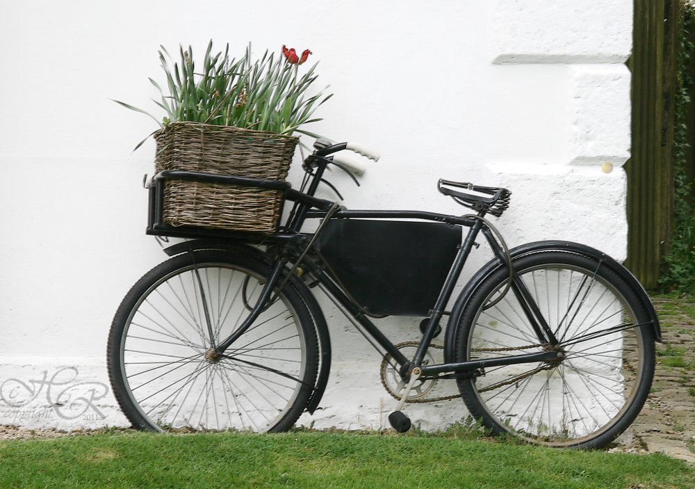 Bicycle & Basket