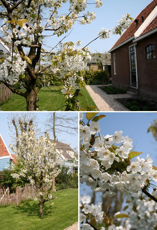 cherrytree.jpg