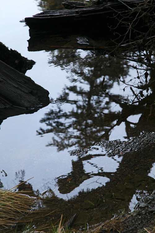 reflection and more at Son-i-Hat Creek, Kasaan, Alaska