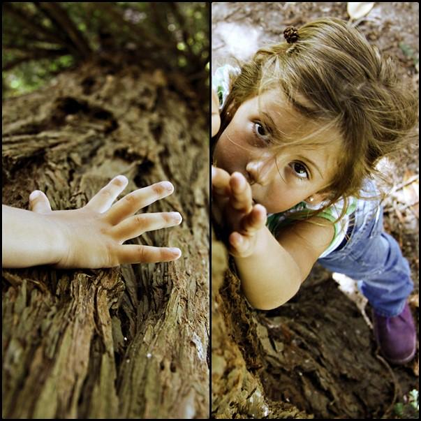 díptico-3 árbol