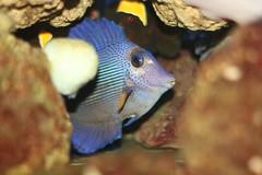 Acquario (Vecktoring) Tags: fish color acquarium pesci colori acquario interni pesce