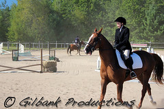 Showing Off (GilbankProductions) Tags: horses horse farm riding horseback horsebackriding horseshows morgans girlriding farmhorses