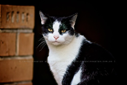 Mutual regard, street cat and a photography, by twoguineapigs pet photography