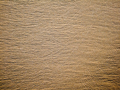 DSCF1401.jpg (Pinox67) Tags: brown abstract beach sand vieste
