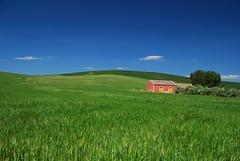 Spring in Sicily - Primavera in Sicilia (Giuseppe Finocchiaro) Tags: red house verde green primavera field casa spring nikon wheat campo sicily rosso sicilia grano bellitalia raddusa