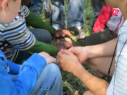 Up-close shot of kids exploring a geocache they just found