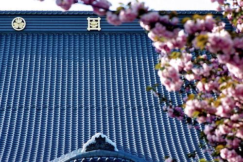 瑞輪寺の八重桜