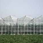 Tomate serre en verre et champ de pomme de terre à Ploubazlanec
