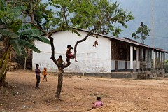 60DBD6_1836 (bandashing) Tags: poverty england house mountains tree childhood yard garden children manchester climb branch village child play poor hills sit sylhet bangladesh frolick treetop bandashing