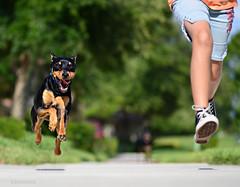 fear of the big dogs - dog run (Laurarama) Tags: dog child action fear running run sneakers converse runner chucks dogrun odc thebigdog nikkor105mm25ai nikond7000 laurafasulo