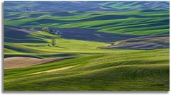 Shades of green (walla2chick) Tags: usa washington shadows farm hills wa palouse palousehills steptoebutte paintingvenice topazadjust steptoebuttefarm 3767tpzaven