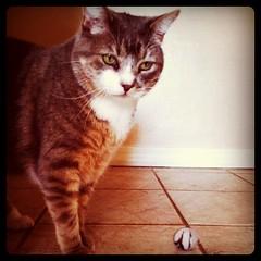 4-13-11 (mkrumm1023) Tags: cat ball kitty fetch