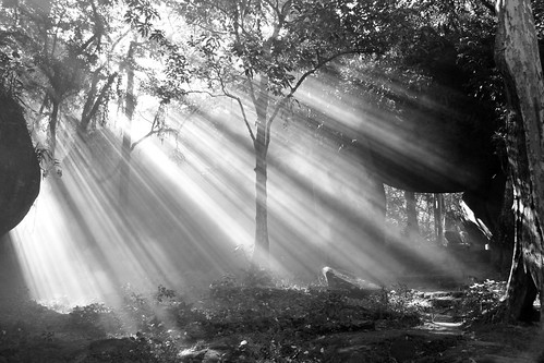 フリー写真素材, 自然・風景, 森林, 樹木, 日光・太陽光線, モノクロ写真, ブラジル,