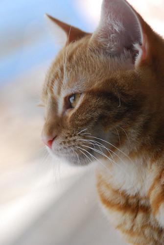 A pensive cat