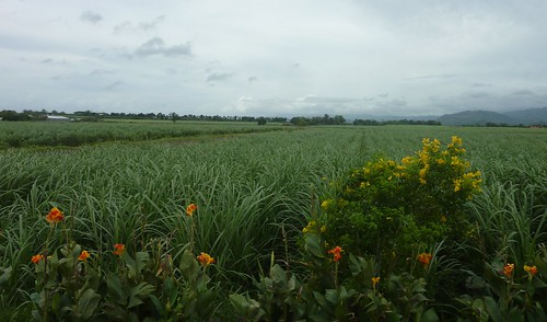 Negros -Bacolod-Savador-San Carlos (136)