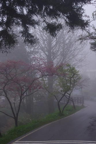 阿里山大霧又下雨