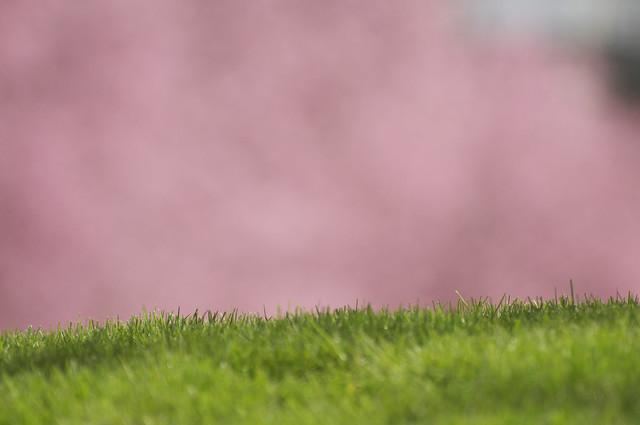 085/365 ~ Pink Haze