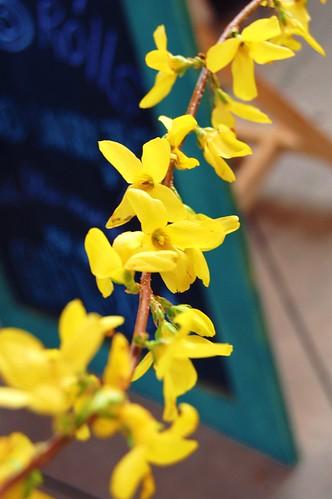 Market Florals