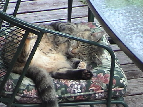 belly-up cat nap