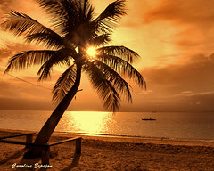 Hello Summer (SweetCaroline) Tags: light sunset reflection coconut palm gb pk zuiko davao sweetcaroline samal e520 talicudisland dayangbeachresort