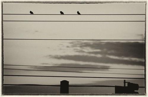 Birds antique plate by laguglio