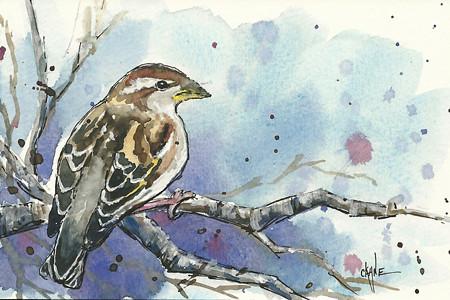 20110409_sparrow_final