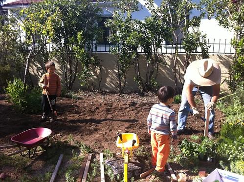 Starting the vegetable garden