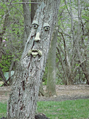 Unique Tree (LisaKurr) Tags: wood tree face tongue nose cool eyes woods unique eerie creepy bark unusual stickingouttongue