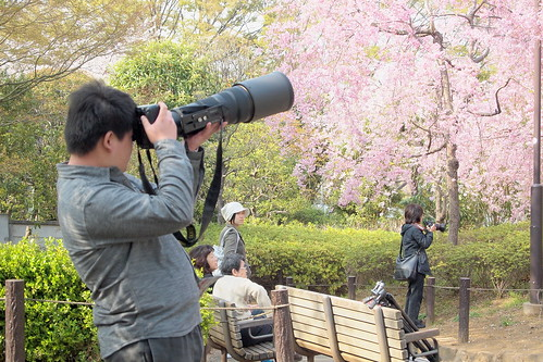 桜に魅せられた人