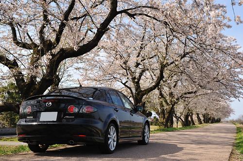 富山 塩の千本桜