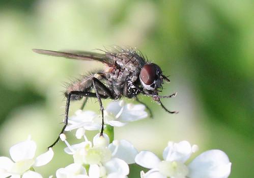 fly_close