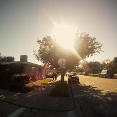 GOPR0078 (Schuyler Van Loon) Tags: california street trees santacruz tree sunny fisheye lensflare seabright middleofthestreet gopro oceanveiw