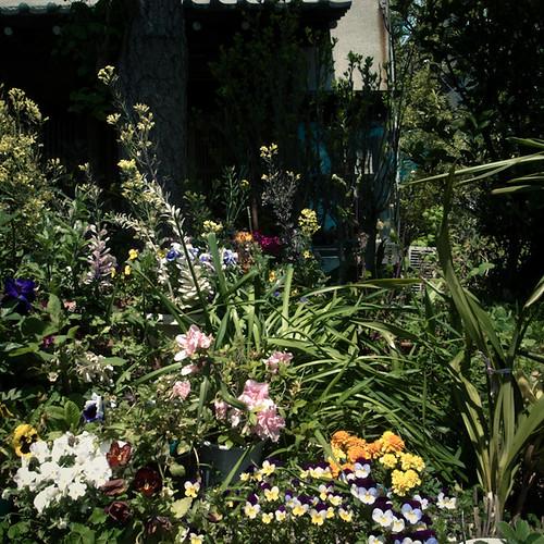 Junglefied Front Garden