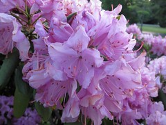 Irene's flowers (stephenadcox) Tags: ibeauty