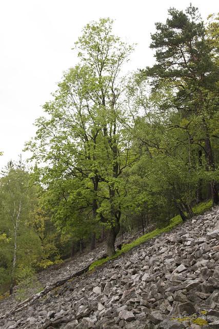 58 Strom v suťáku