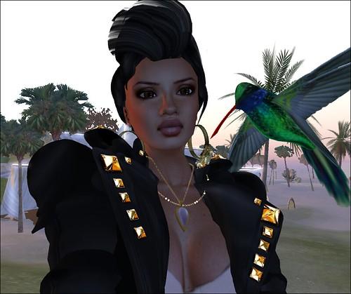Thassa - my wild hummingbird