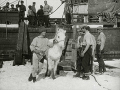 Four men and a pony (The National Archives UK) Tags: horse caballo cheval pony cal siberian pferde cavallo cavalo southpole hest hevonen paard terranova hst captainscott ko britishantarcticexpedition herbertponting thenationalarchivesuk tna:IAID=c10276476 tna:ItemReference=copy1p562i82 tna:SeriesReference=copy1 tna:DepartmentReference=copy tna:PieceReference=copy1p562