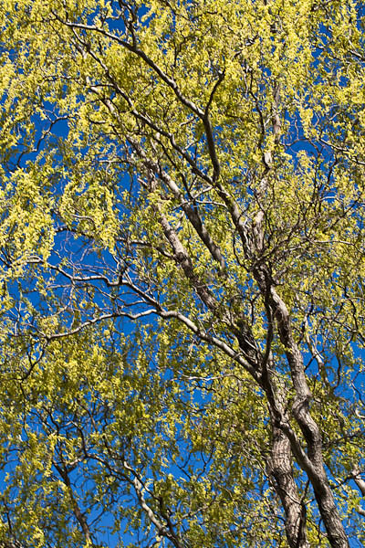 Spring Greening, University of Wisconsin - Madison Arboretum