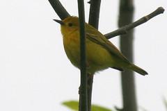 bird 073