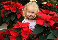 geringer gartenpark weihnachtssterne  mit celestin (18/168) (gartenpark) Tags: dornbirn feldkirch pflanzen blumen bregenz garten rankweil bludenz aut vorarlberg grtner geringer gartenpark