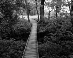 The beginning of an Adventure (zoglmannk) Tags: bridge bw usa creek iso100 footbridge hi