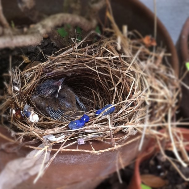 A baby bird was born in our backyard. Cute!!!