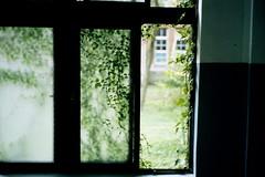 Summer green (我的小風景) Tags: leica green m3