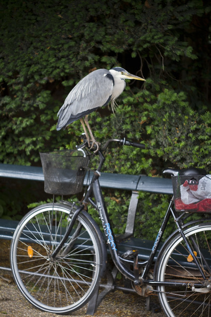 Heron Bicycle