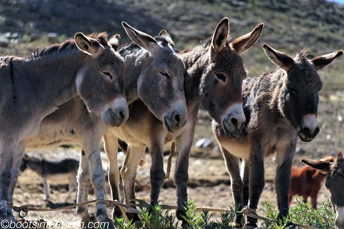 Donkeys on the outskirts of town