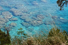 Snorkeling at Honolua Bay, Maui (Shauna Stanyer (Northern Pixel)) Tags: ocean blue water beautiful coral swimming island hawaii bay boat paradise snorkel pacific maui snorkeling clear hawaiian tropical honolua