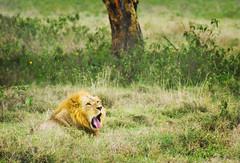 "PhotoFly Travel Club Kenya Safari 2011! • <a style=""font-size:0.8em;"" href=""http://www.flickr.com/photos/56154910@N05/5892409361/"" target=""_blank"">View on Flickr</a>"