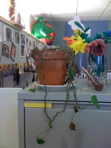 awww . . . plant fail.